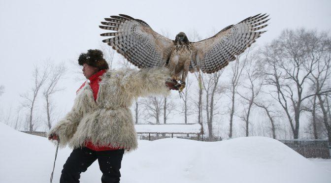 图片新闻:与鹰共舞