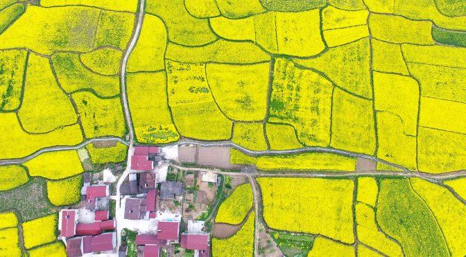"""迎接十九大:崛起的""""绿色脊梁""""-俯瞰湖北省武汉市青山区戴家湖公园"""