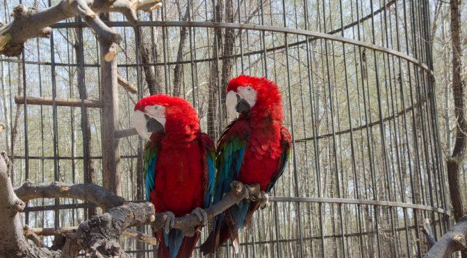 美丽的北京野生动物园