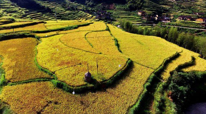 图片新闻:秋天的武夷 美丽的田野