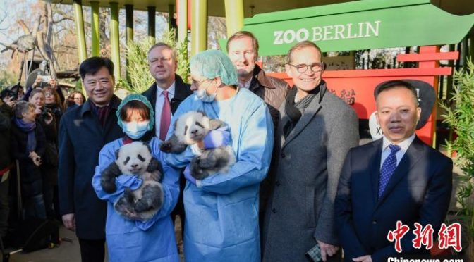 首对在德诞生的大熊猫双胞胎满百日 命名正式公布(组图)