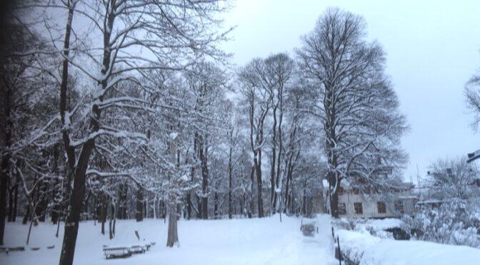 图片新闻:瑞典雪景惊艳世纪